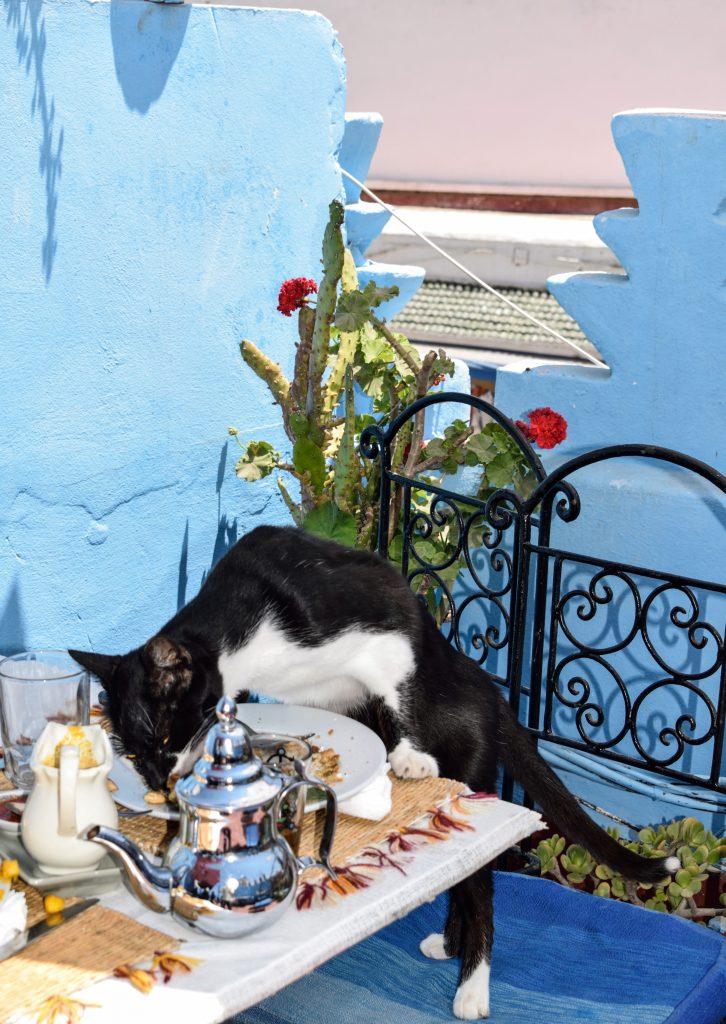 gatto affamato essaouira marocco