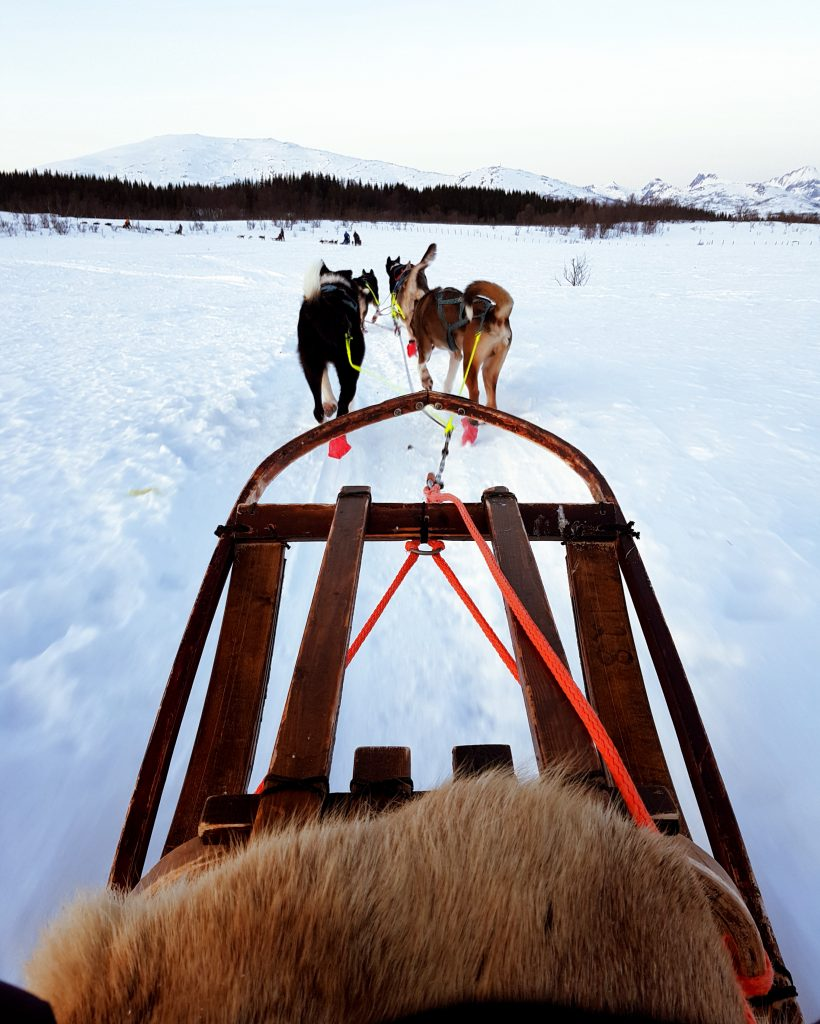 Dog sleeding a Tromsø