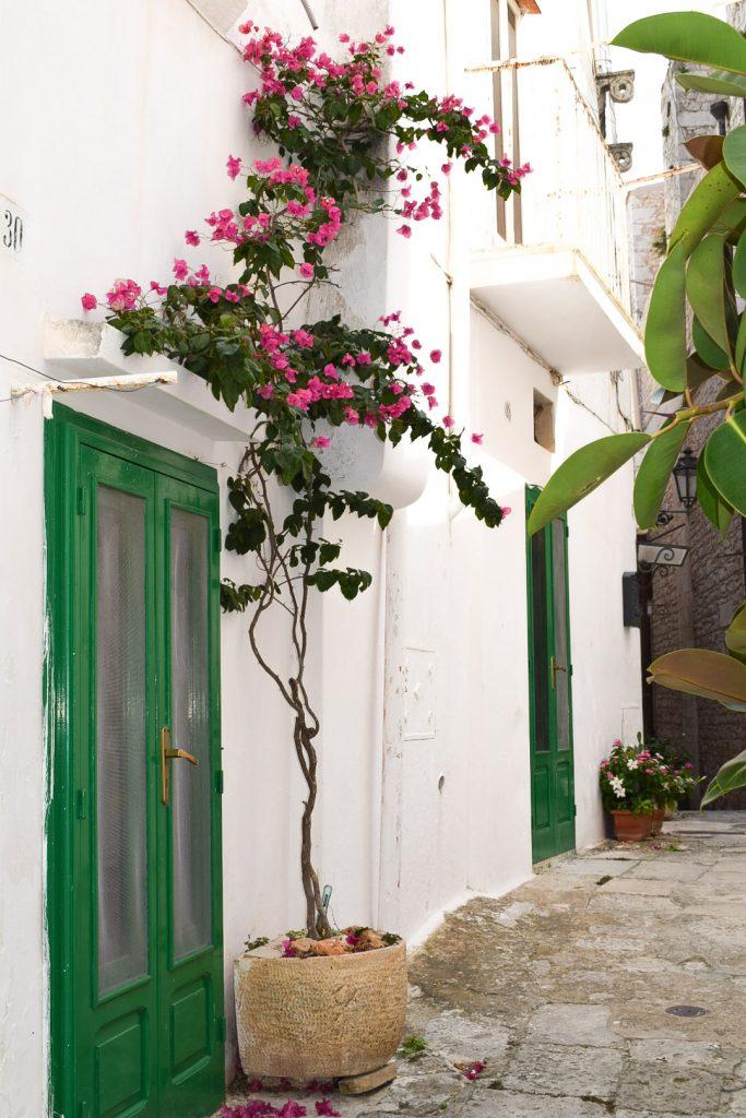 Porte verdi e fiori rosa a Ostuni