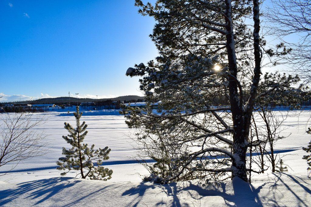 alberi innevati sul lago inari lapponia finlandese