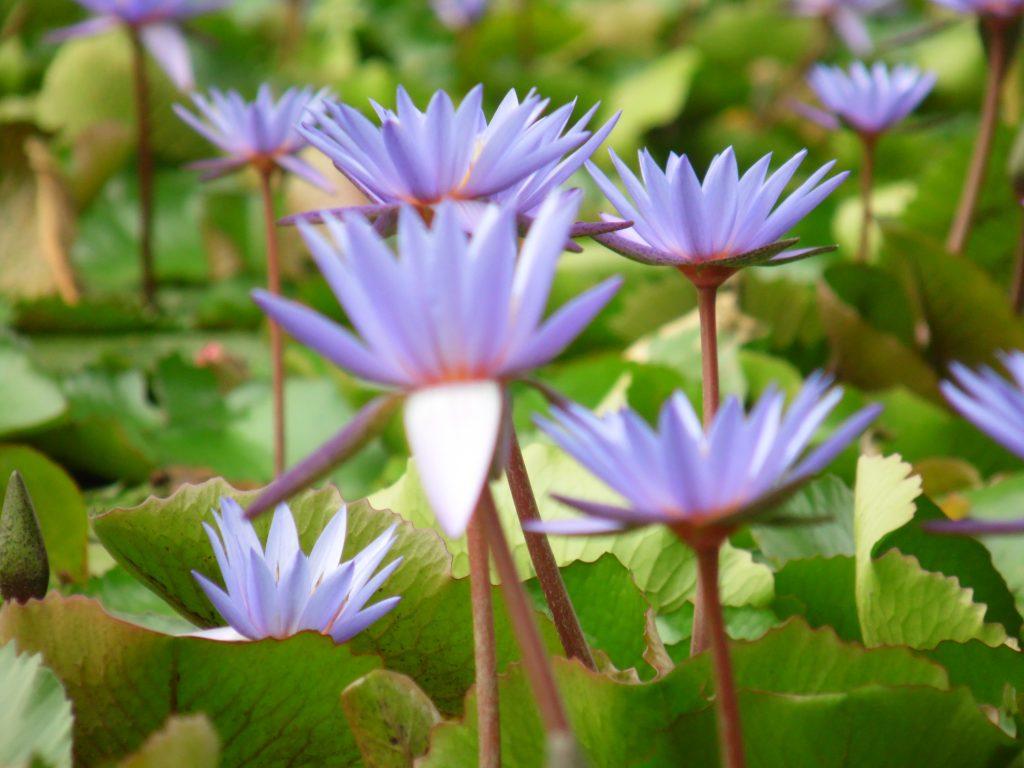 fiori a singapore