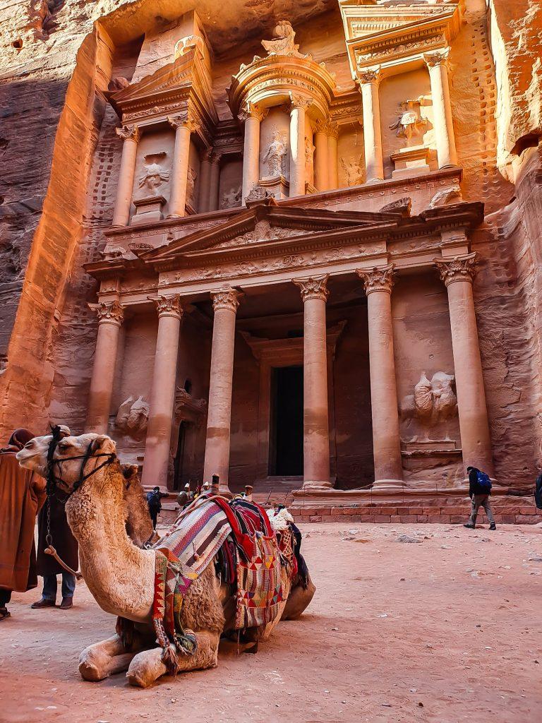 cammello a petra giordania